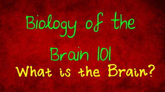 BiologyTheBrain