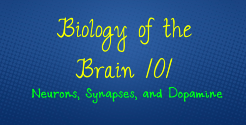 Biology of the Brain 101: Neurons, Synapses, and Dopamine